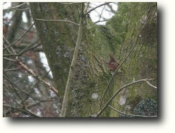 hide and seek a red squirrel